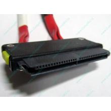 SATA-кабель для корзины HDD HP 451782-001 459190-001 для HP ML310 G5 (Камышин)